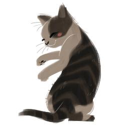 kat orpcat grootebroek