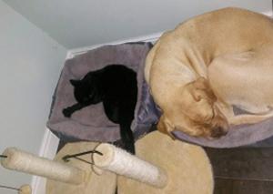 orpacat cattery grootebroek kittens