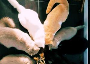 katten orpacat